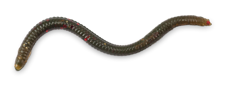 Iron Claw gumová nástraha Drop Stuff Crawler 7,5 cm, Vzor WB, 22 ks/bal